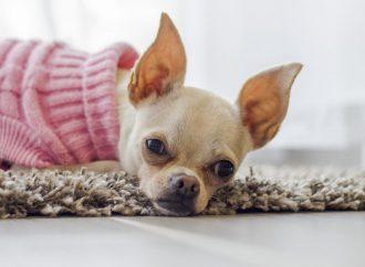 Ile kosztuje hotel dla psów?